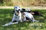 Deuce (1997 - 8/13/2010) - Click For Enlargement